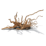 Decor_Roots_Amano