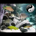 Fish_Tang_Comb_Lampro