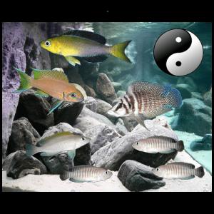 Fish_Tang_Comb_Snek