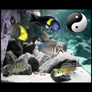 Fish_Tang_Comb_Tropik