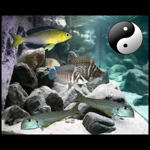 Fish_Tang_Comb_Xeno