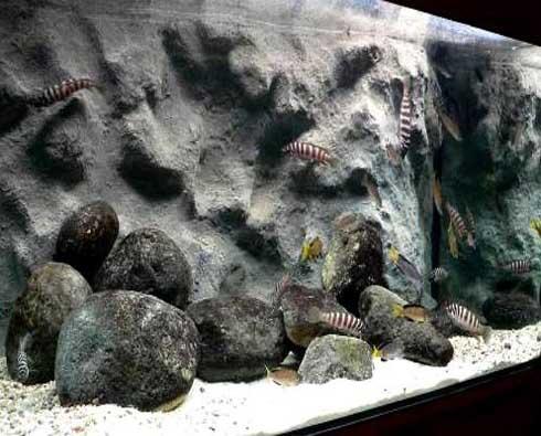 Pozadie do akvária