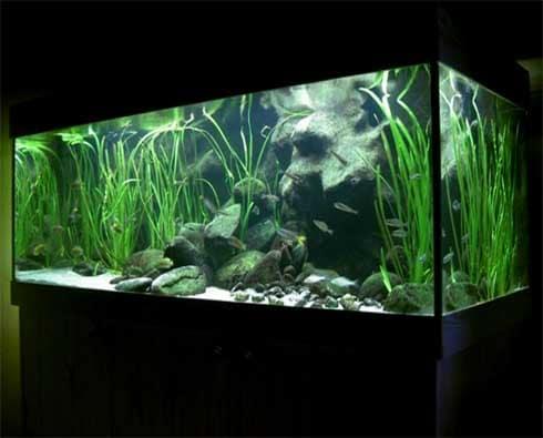 Projekt akvária