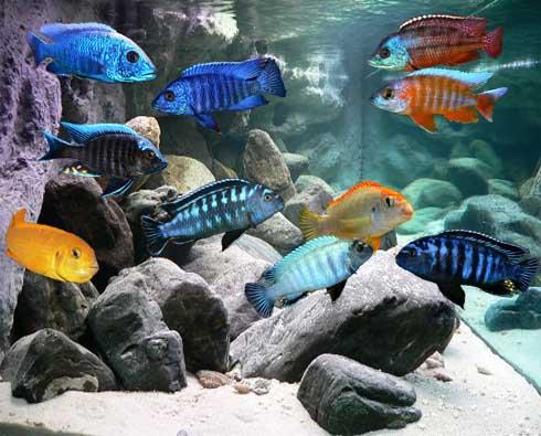 Malawi ryby