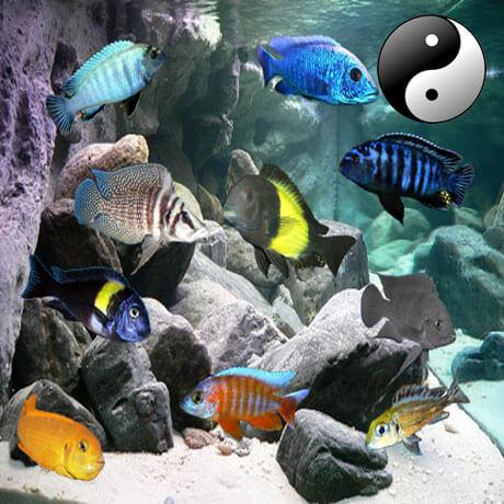 Polit kombinácie rýb